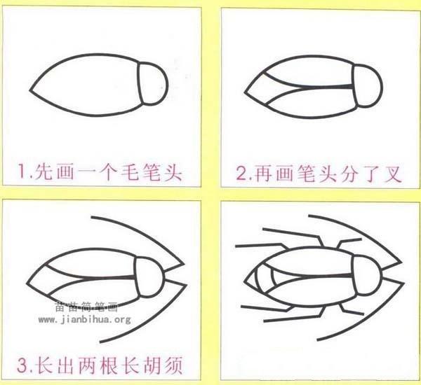 蟑螂简笔画画法步骤:怎么画蟑螂