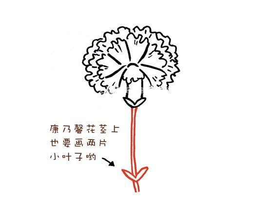 第八步:画出花径,康乃馨花径上也要画两片小叶子哟!