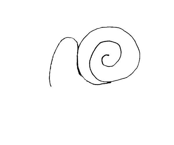 第二步:在壳的前面,画上半个椭圆形,稍微长一些。